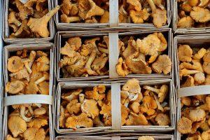 Непростой была погода в этом году, непрост поэтому и грибной сезон. Фото: pixabay.com