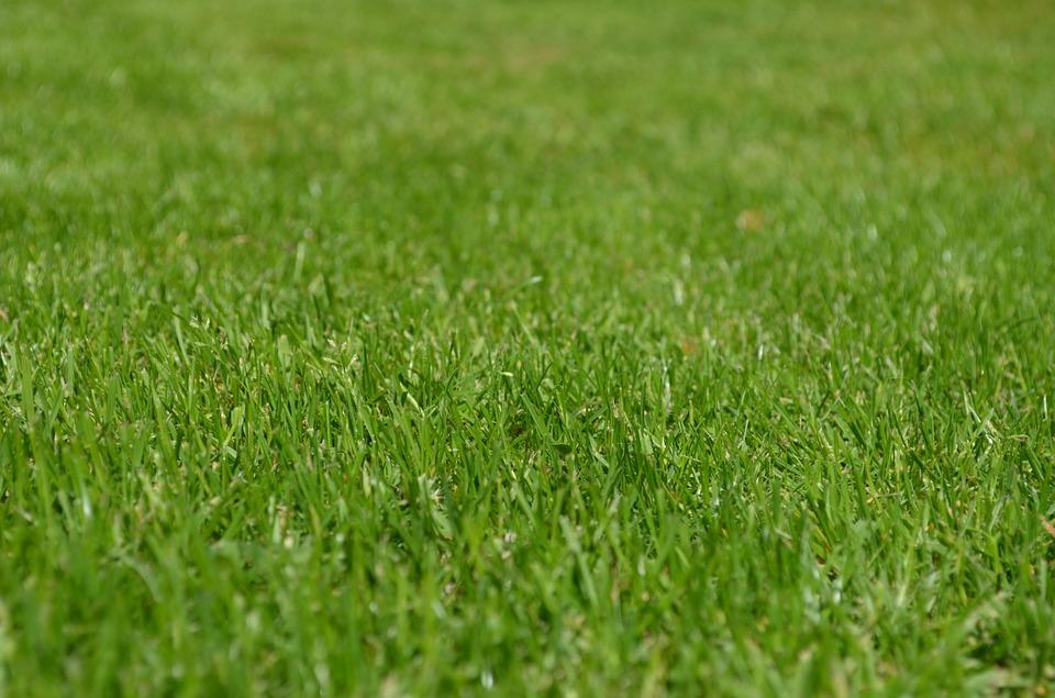 Активными участниками голосования «Твой газон — твои правила!» стали жители Южного округа