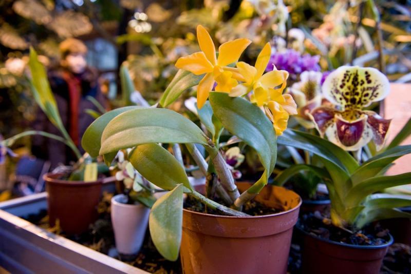 Музей-заповедник «Царицыно» продолжит цикл «Ботанических бесед»