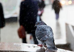 Дождь и небольшой снег ожидаются на выходных в Москве