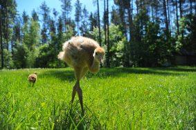 Гости узнают много интересного о необычных птицах. Фото: Светлана Колоскова