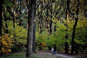 В Битцевском лесу проведут экскурсию о птицах. Фото: Александр Казаков, «Вечерняя Москва»