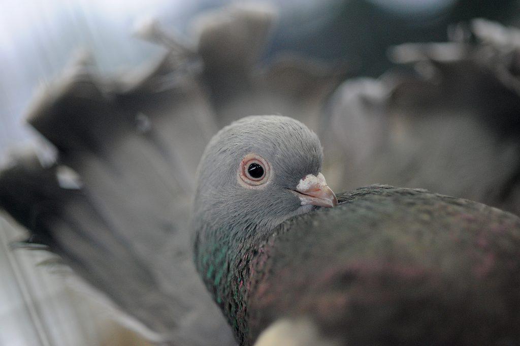 Что делать, если соседи кормят голубей