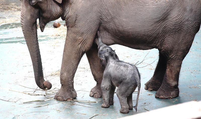 ВМосковском зоопарке подсчитали детенышей, родившихся втекущем году