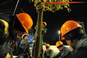 Почти 40 тысяч деревьев высадили в Москве с начала года