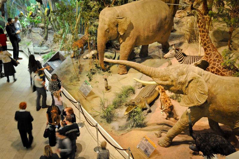 Отпечаток лемура возрастом 47 миллионов лет впервые покажут в Дарвиновском музее