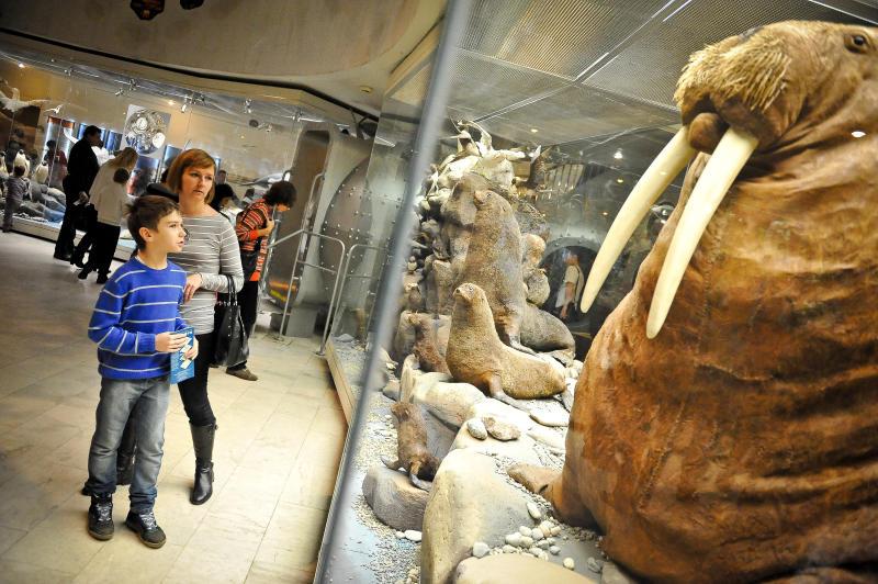 Коллекция Дарвиновского музея пополнилась новыми экспонатами