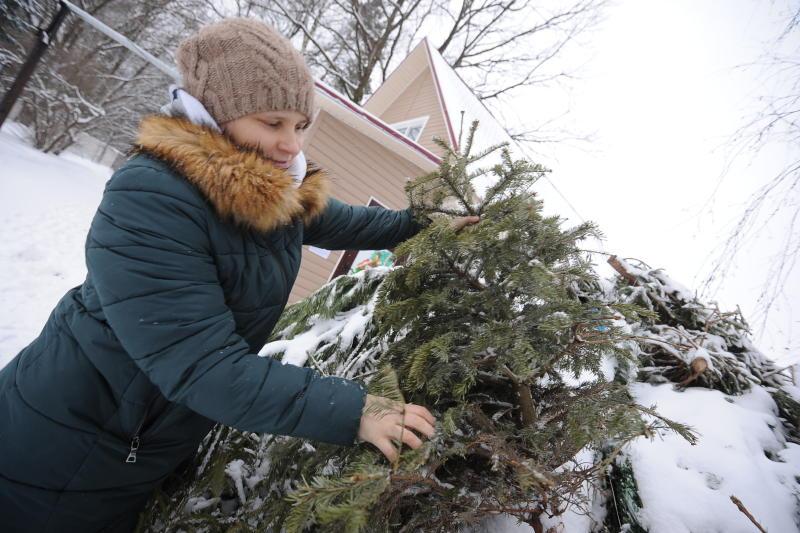 Москвичи смогут сдать елку напереработку после праздников