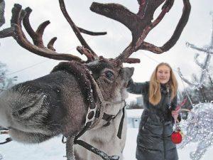 Катание в собачьих, оленьих и лошадиных упряжках откроют этой зимой в Царицыне. Фото: Анна Иванцова, «Вечерняя Москва»