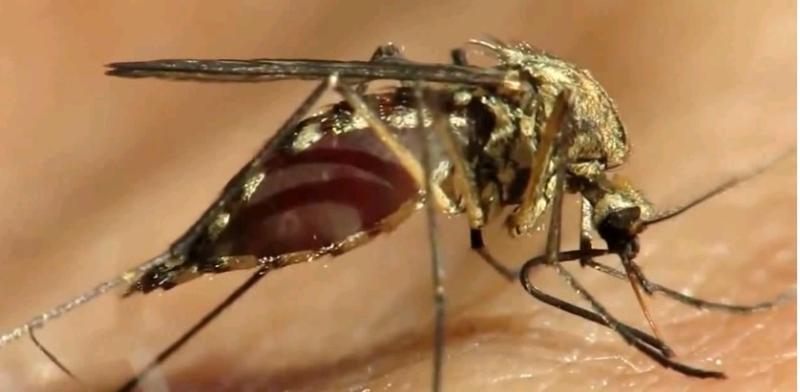 Биологи нашли способ предотвратить укусы комаров