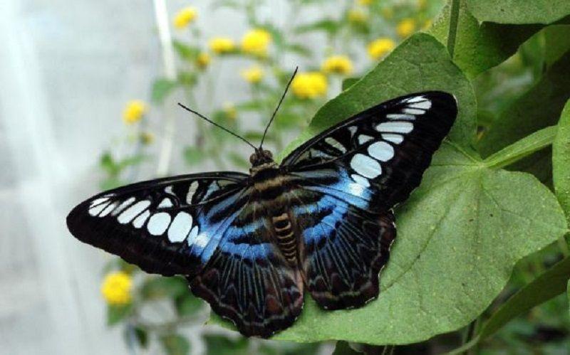 Тысячи тропических бабочек доставят в Москву