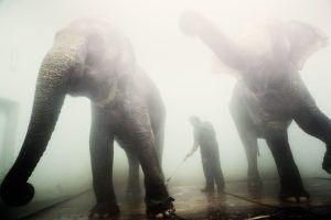 Здесь появятся вольеры для животных. Фото: Анна Иванцова