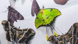 Более 4 тысяч тропических бабочек закупит Московский зоопарк. Фото: mos.ru