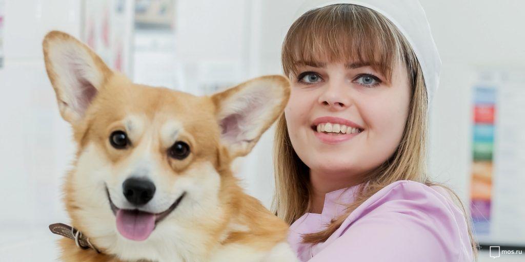 Вакцинация домашних животных: Выбери удобный формат!