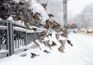 Столичный снегопад продлится до утра понедельника.Фото: архив, «Вечерняя Москва»