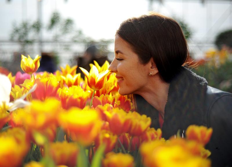 Выставка весенних цветов открылась в царицынских оранжереях