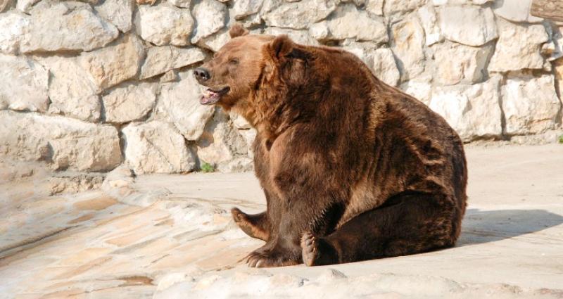 В Московском зоопарке медведи вышли из спячки. Фото: mos.ru