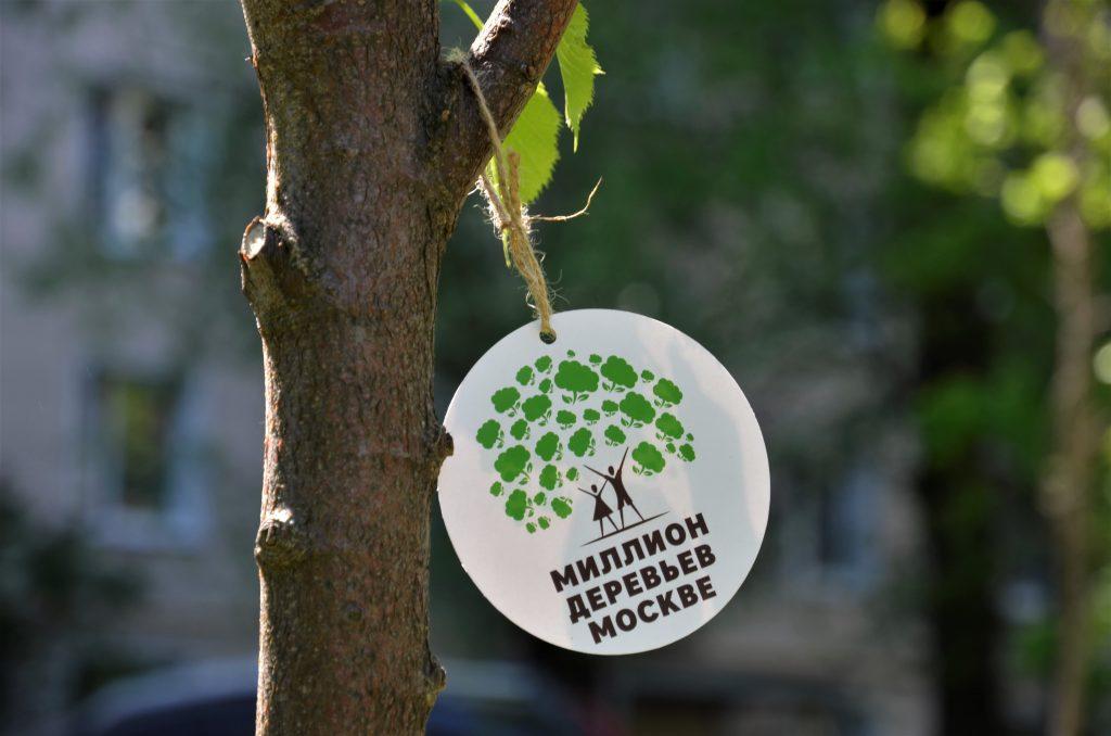 12 мая 2018 года. В районе Нагатинский Затон по акции «Миллион деревьев» высадили 1888 растений разных видов. Фото: Анна Быкова