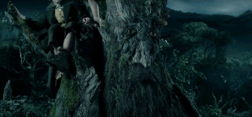 Самое древнее дерево Европы нашли в Италии