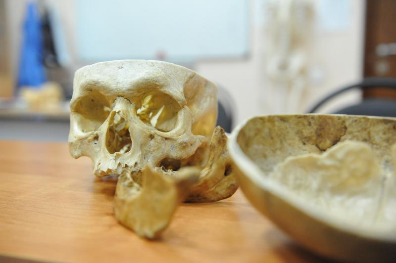 Ученые обнаружили в России древнейшую чуму на Земле
