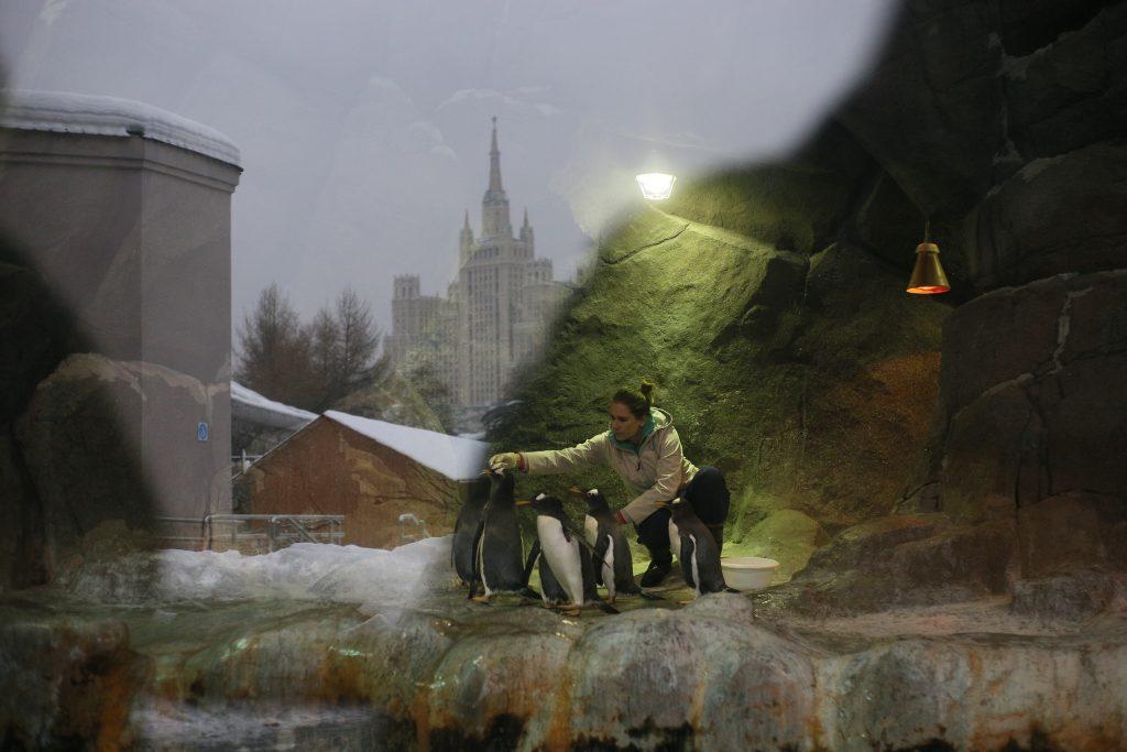 Московский зоопарк закроют 30 июня в связи с непогодой