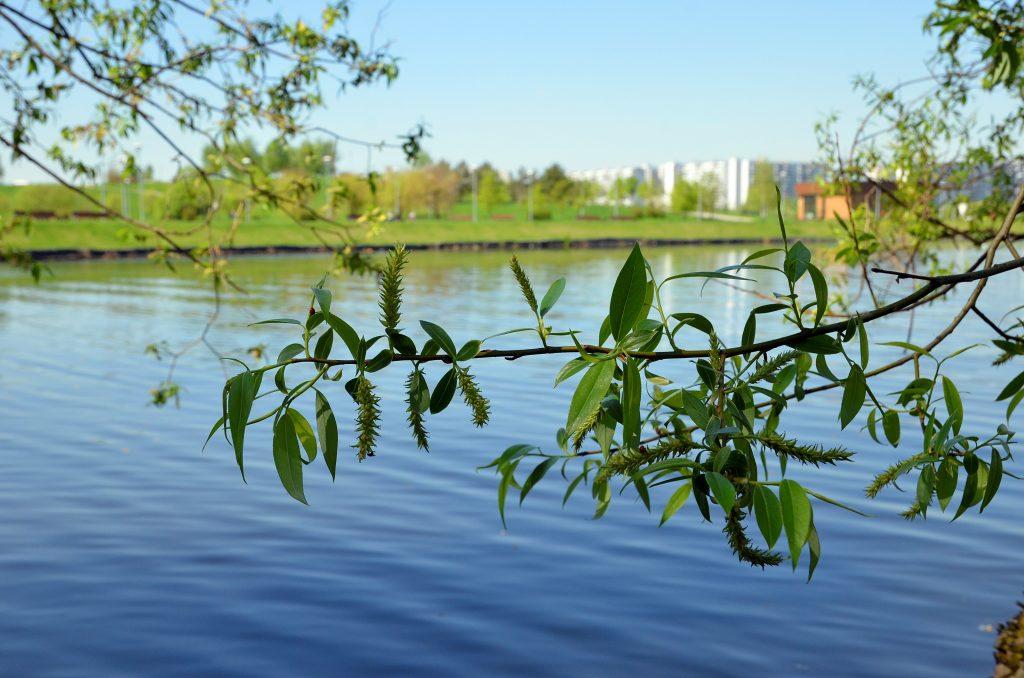 Фонтан на Братеевских прудах восстановят
