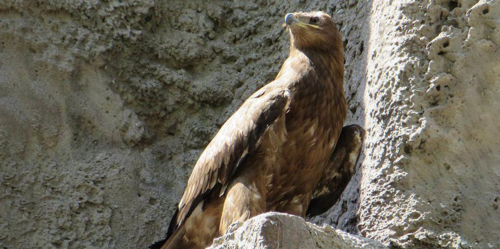 В Москве назвали степного орла в честь Игоря Акинфеева