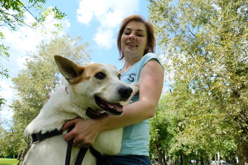Горожане смогут забрать к себе собаку из приюта