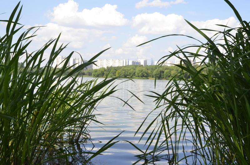 Началась разработка проекта благоустройства Нижних Царицынских прудов. Фото: Анна Быкова