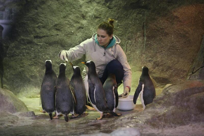 Экологи бьют тревогу из-за массового исчезновения пингвинов