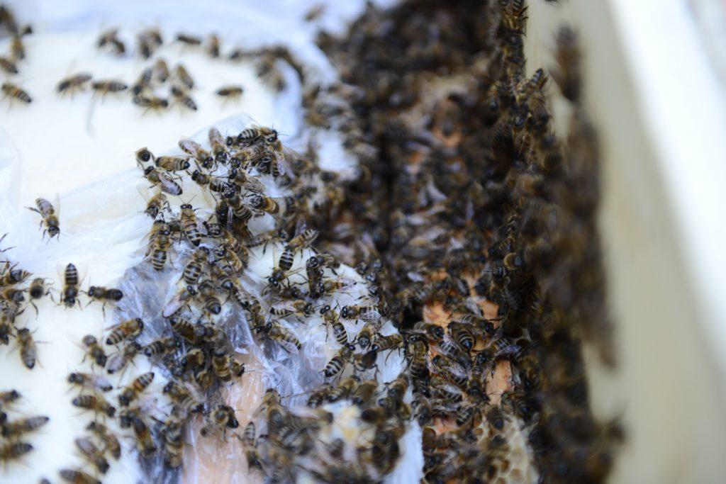 Пчелы оказались способны узнавать садовников в лицо