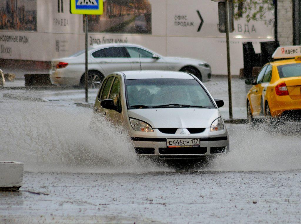 ЦОДД призвал москвичей не парковаться под деревьями в среду