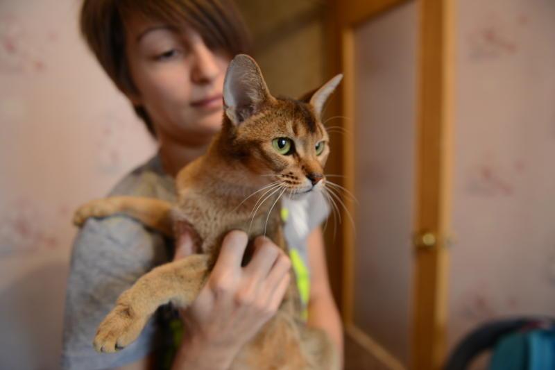 В Москве отметили снижение численности бездомных животных