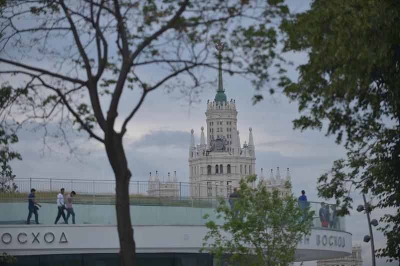 Московских водителей попросили не парковаться под деревьями