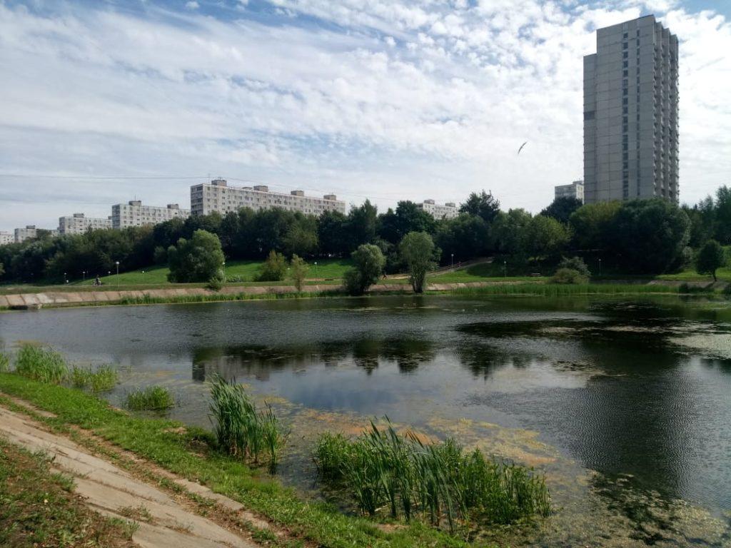 Вид на водную гладь: как москвичи хотят благоустроить Варшавские пруды. Фото: Мария Иванова