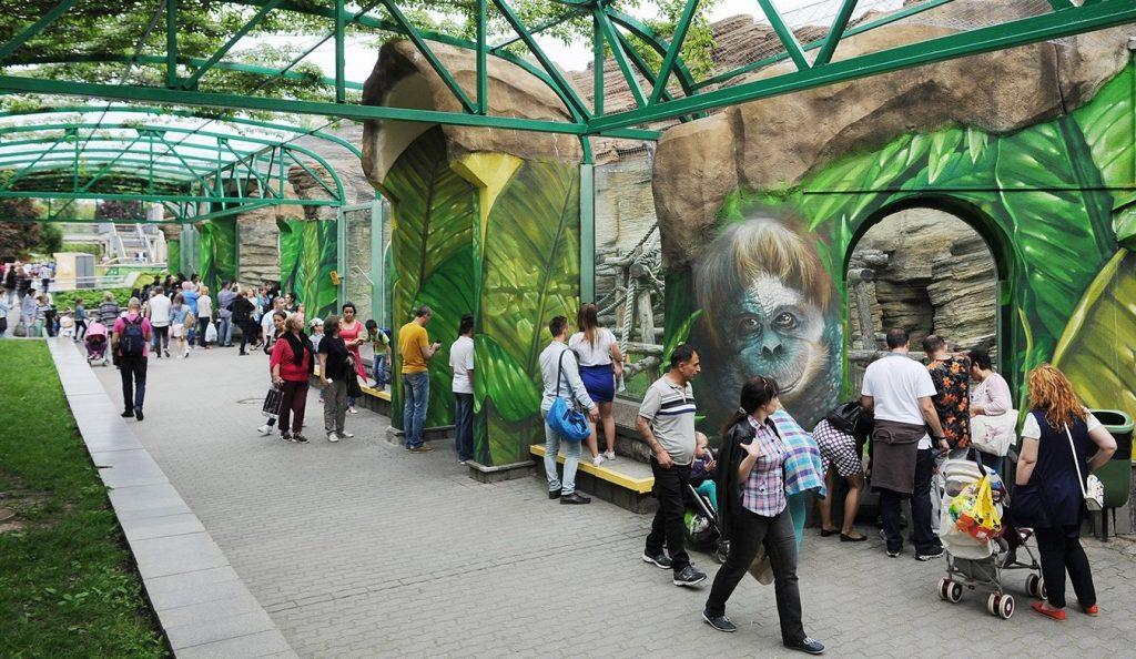 Московский зоопарк принял детеныша борнейского орангутана
