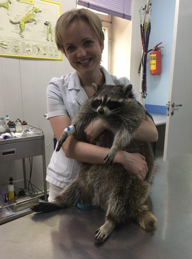 Алена Соколова с енотом-пациентом после успешной операции. Фото: из личного архива