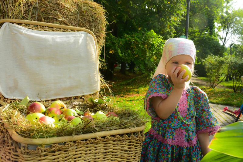 Сезон шарлотки: горожан приглашают на сбор яблок в Донской монастырь