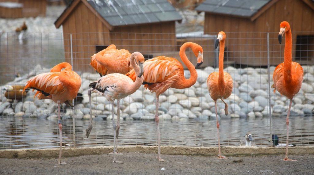 Московский зоопарк изменит режим работы