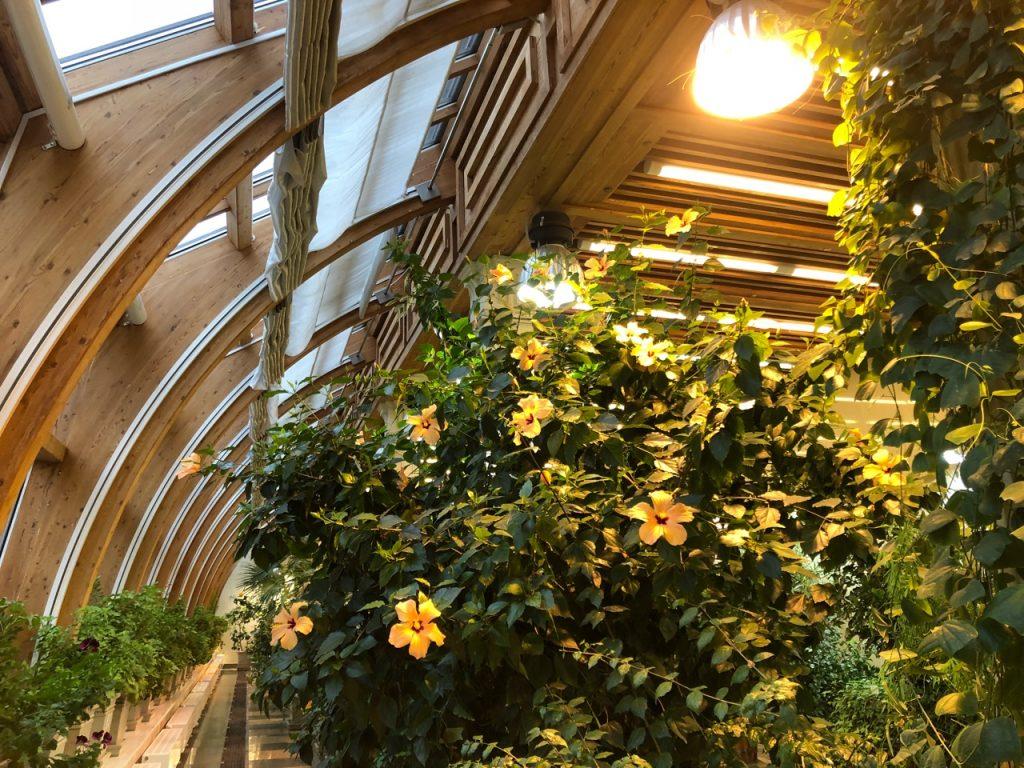 Сегодня теплицы снова пестрят от изобилия экзотических растений, среди которых есть и те, которыевыращивалипри ЕкатеринеII. Фото: Анастасия Маслова