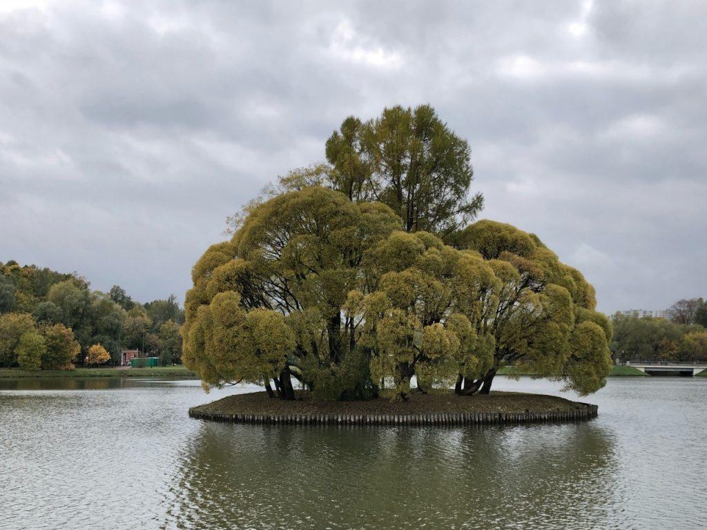 Царицынский Эдем: оранжерейные пруды ждет новая жизнь. Фото: Анастасия Маслова