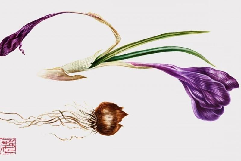 Необычные легенды о растениях узнают посетители галереи «На Каширке»