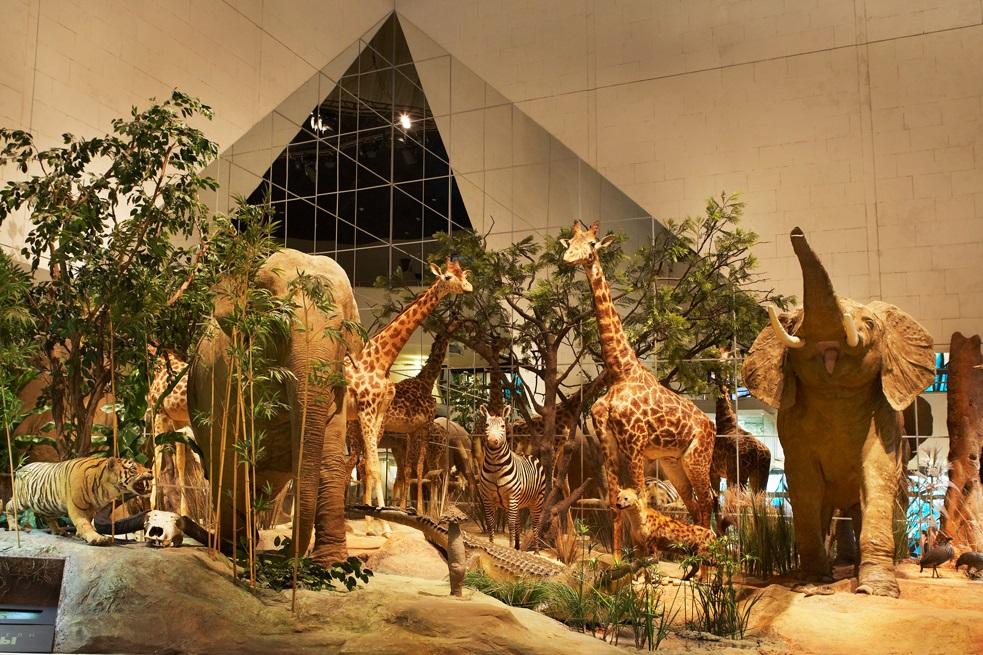 Флешмоб и белая тигрица Кали: Дарвиновский музей отпразднует 111 день рождения