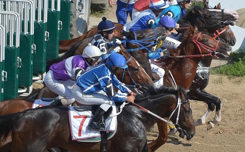 Спортшкола «Битца» примет Осенний кубок Федерации конного спорта по конкуру