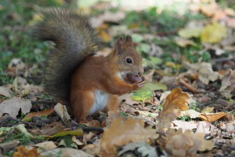 Милые создания: про правильное кормление белок рассказали в Мосприроде