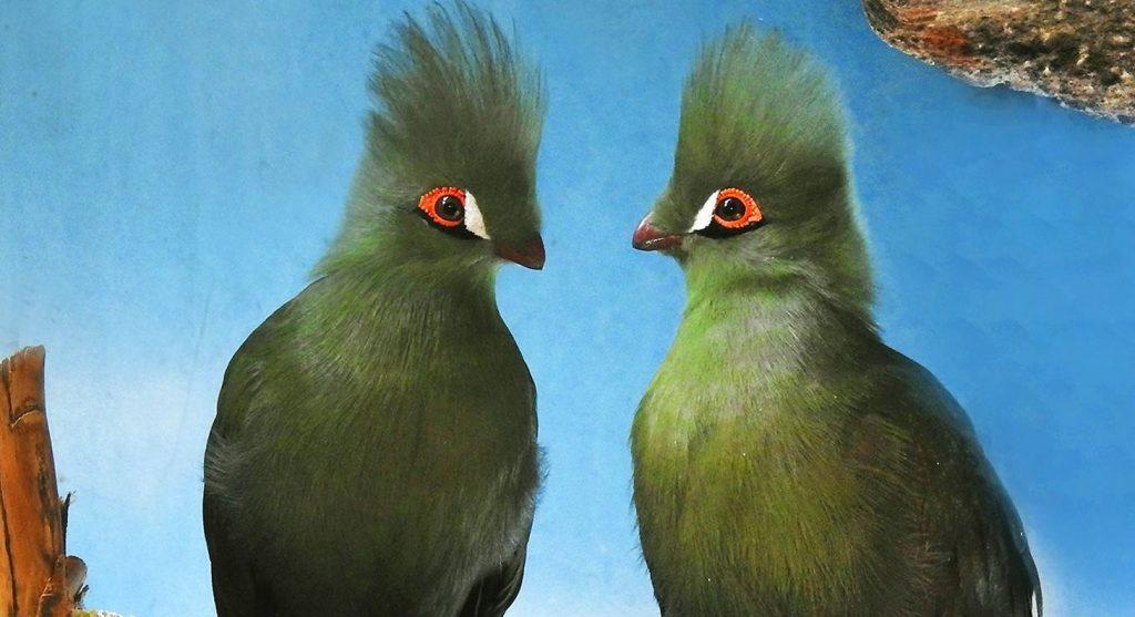 Итоги года: зоопарк Москвы посчитал редких птиц