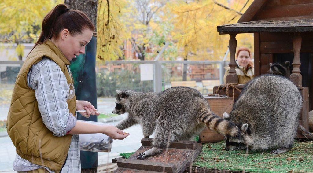 Московский зоопарк сократит рабочий день с 1 ноября