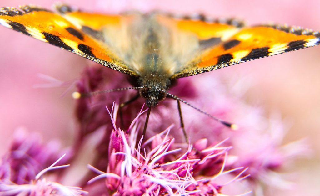 Спешим делать добрые дела: в «Авангарде» пройдет кинофестиваль «Крылья бабочки»