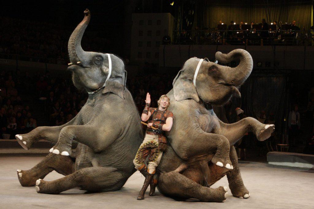 Самое эмоциональное искусство: в Дарвиновском музее откроют выставку «Цирк, цирк, цирк!»
