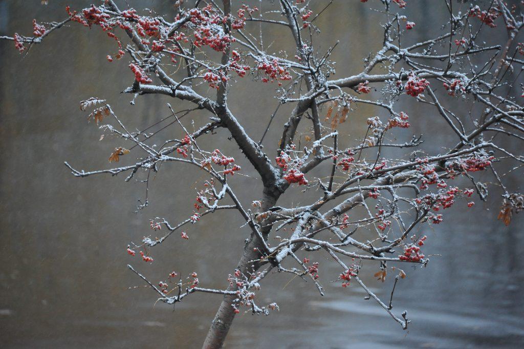 Гидрометцентр: 21 ноября в Москве пройдет легкий снегопад